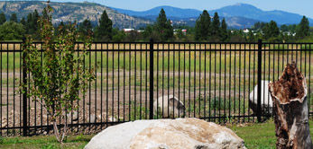 Iron Fence - Install